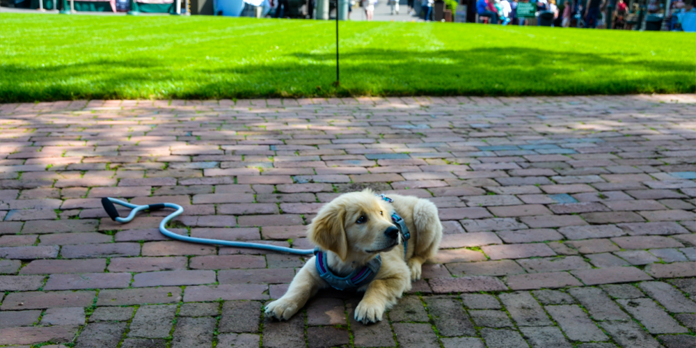 Pet-friendly shops and eateries at Peddler's Village